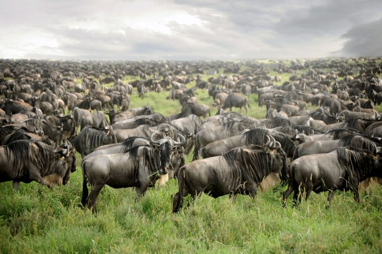 http://www.worldwide-safaris.com/package/14-day-tanzania-wildebeests-calving-safari-and-zanzibar/